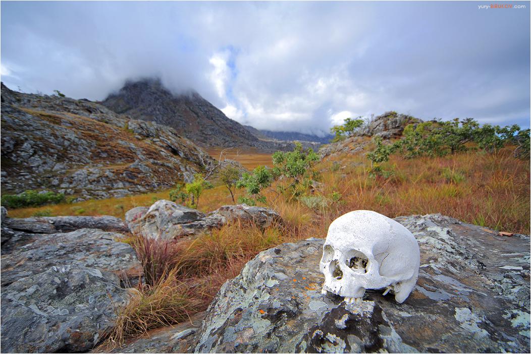 Череп на камне в горах Чиманимани. Зимбабве
