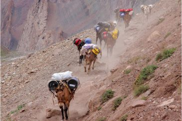Караваны мулов на горных тропинках. Аргентина