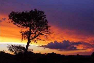 Одинокое дерево. Аргентина