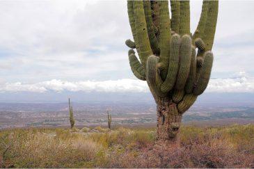 Пейзаж с огромным кактусом. Аргентина