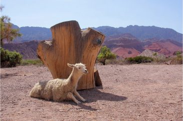 Припаркованая лама. Аргентина