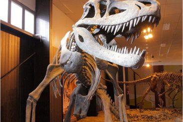 Скелеты динозавров, найденные на территории нац. парка Исчигуаласто. Аргентина