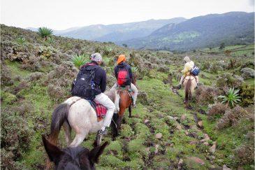 На лошадях по Эфиопии. Горы Бале
