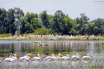 Птицы на берегу озера Зивэй. Эфиопия