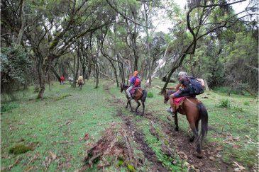 Лес в горной Эфиопии