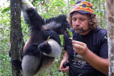 Индри в заказнике Митсинжо. Мадагаскар