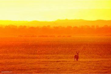 Антилопа в нац. парке Ливонде
