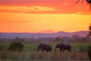 Дикие слоны вечером пришли к кемпингу возле нац. парка Ливонде