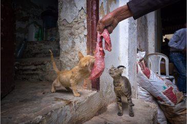 Уличные коты в городишке Мулай Идрис