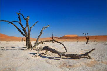 Deadvlei в районе Соссусфлей (пустыня Намиб)