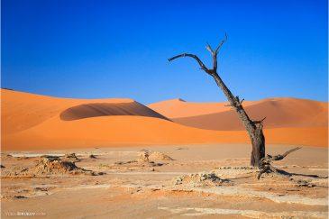 Сухое озеро Deadvlei среди песков пустыни Намиб