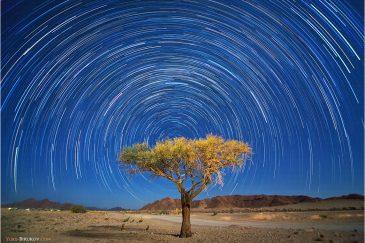 Звезды и одинокое дерево в Соссусфлей (пустыня Намиб)