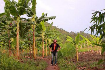 Банановые плантации возле озера Ньяса