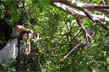 Красные колобусы на острове Занзибар