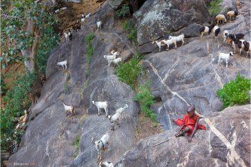 Мальчик пастух в масайской деревне Лонгидо