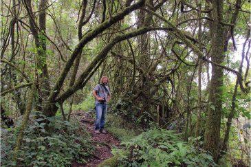 В джунглях на склоне вулкана Нгози. Танзания
