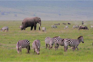 Животные на дне кратера Нгоронгоро