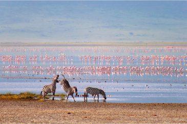 Зебры и фламинго в кратере Нгоронгоро