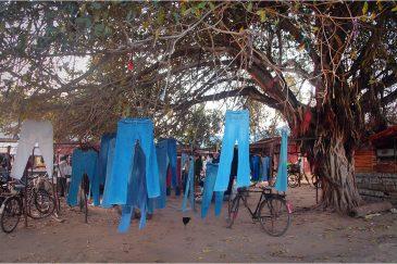 Джинсовое дерево. Танзания