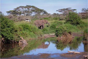 Фотографирование слонов в Серенгети