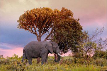 Слон возле кратера Нгоронгоро