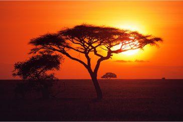 Восход солнца над равнинами Серенгети
