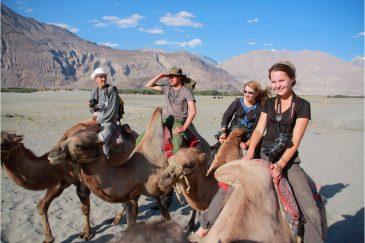 На спинах турфанских верблюдов в долине Нубра. Ладакх. Индия