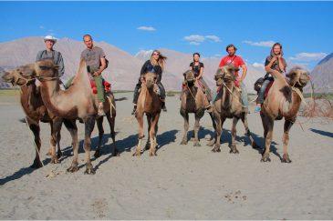На верблюдах в долине Нубра. Ладакх. Индия