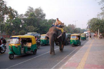 На улицах Дели. Индия