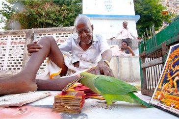 Гадательный попугай в Чидамбараме, штат Тамилнаду. Индия