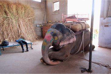 Гараж для слона в Амбере. Штат Раджастан. Индия
