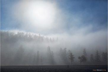 Лес в осеннем тумане. Монголия