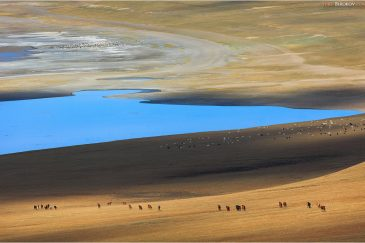 Стадо лошадей у озера Зуун Нуур. Монголия
