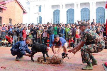 Жертвоприношение животных на центральной площади Катманду в праздник Дассаин