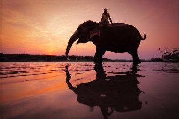 Слон на водопое, нац. парк Читван
