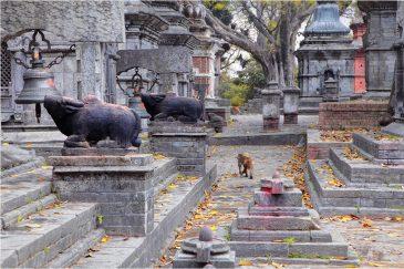 Старые храмы Пашупатинатха