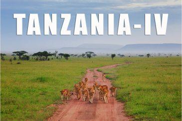 Фото Танзании. Четвертая поездка