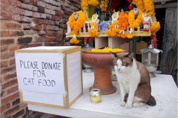 Кот должен сам себе зарабатывать на еду