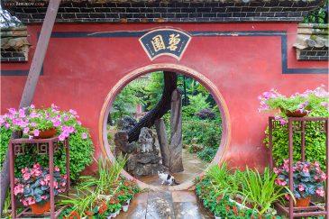 Кошка в одном из парков Куньмина - столицы провинции Юньнань