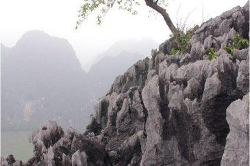Острые скалы и одинокое дерево воле поселка Нин Бин