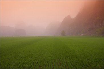 Рисовые поля и скалы в окрестностях Там Кок