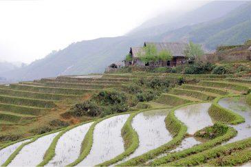 Рисовые террасы в горах Северного Вьетнама