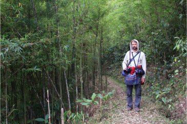 В бамбуковом лесу Северного Вьетнама