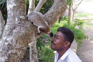 Общение с белками на Шри-Ланке