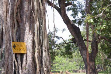 В каждой деревне есть старое дерево - баньян, под которым проходят встречи и посиделки жителей