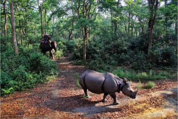 Преследование носорога в национальном парке Читван