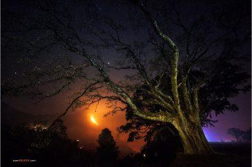 Старое дерево в поселке Бандипур и лесной пожар