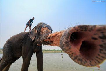 Купание слона в деревне Саураха в нац. парке Читван