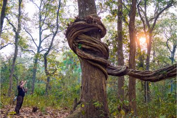 Странное дерево в нац. парке Читван