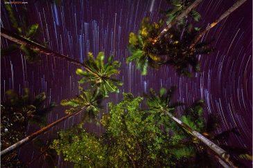 Звезды и пальмы в поселке Порт Бартон на острове Палаван